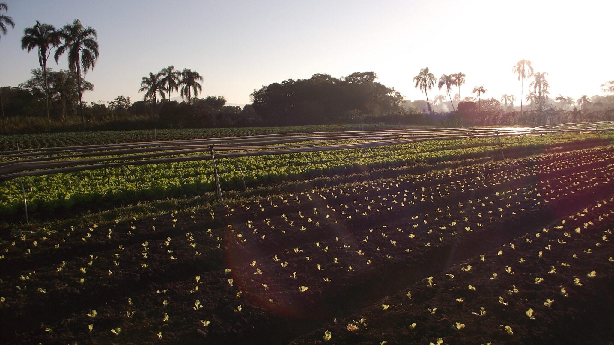 L'agroecologia spazzatura